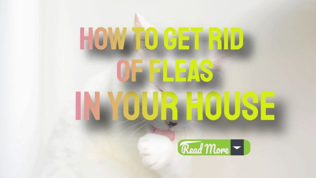 how to get rid of fleas in your house. read more