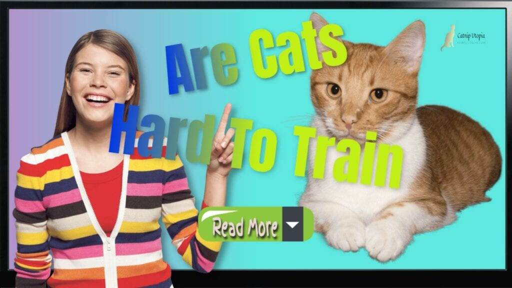 """Featured image with text: """"How to Train a Cat and are Cats hard To train""""."""