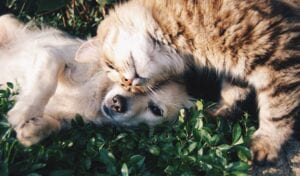 dog lying down with a cat rubbing next to the dog