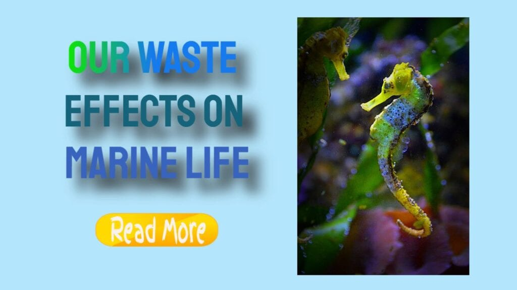 our waste effects on marine life